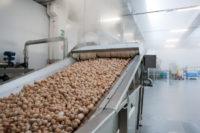 Filiera Consorzio funghi di treviso