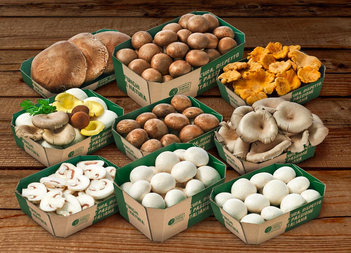 Vaschette in cartone Consorzio Funghi di Treviso