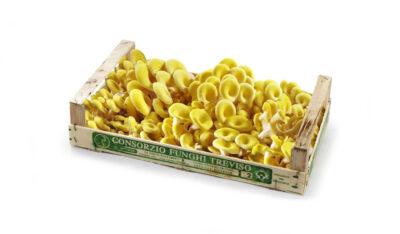 Consorzio Funghi di Treviso Cornucopie settore mercati