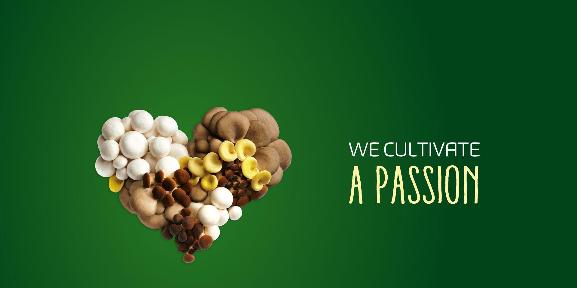 Coltiviamo una passione, consorzio funghi di treviso