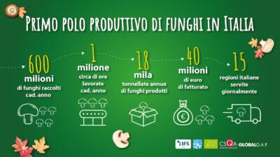 Consorzio Funghi di Treviso - primo polo produttivo di funghi in Italia