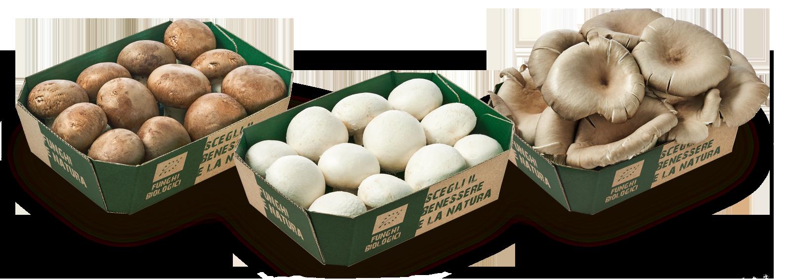 3 vaschette in cartone funghi biologici