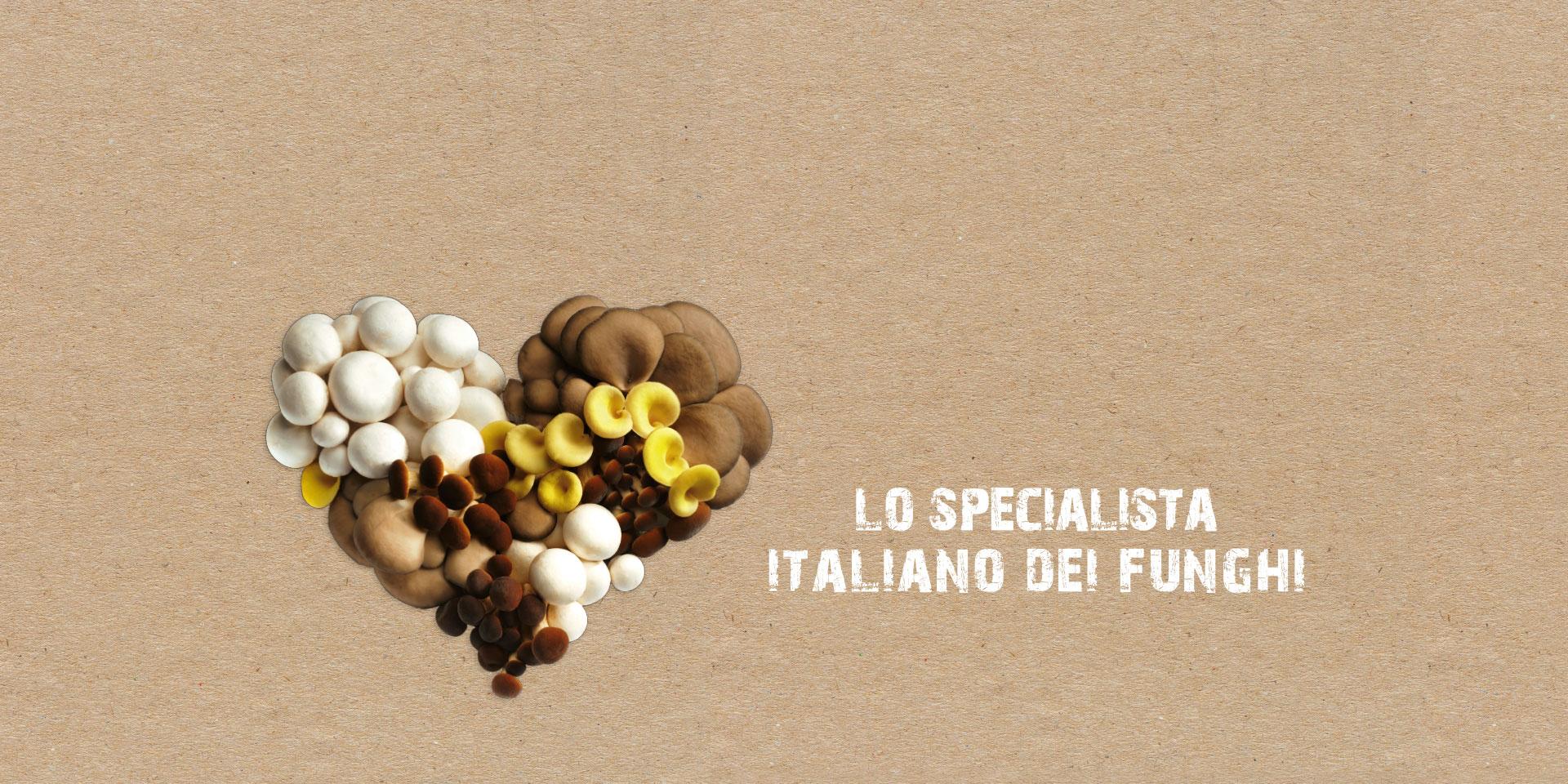 Consorzio Funghi di Treviso - Lo specialista italiano dei funghi